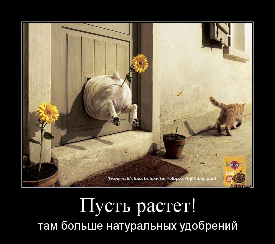 Цветок в попке 7 фотография