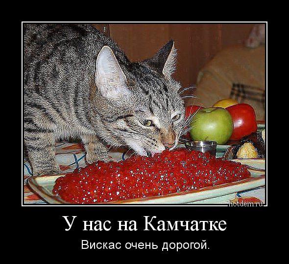 http://hotdem.ru/demotivators/2014/7/hotdem_ru_654368173812297477030.jpg