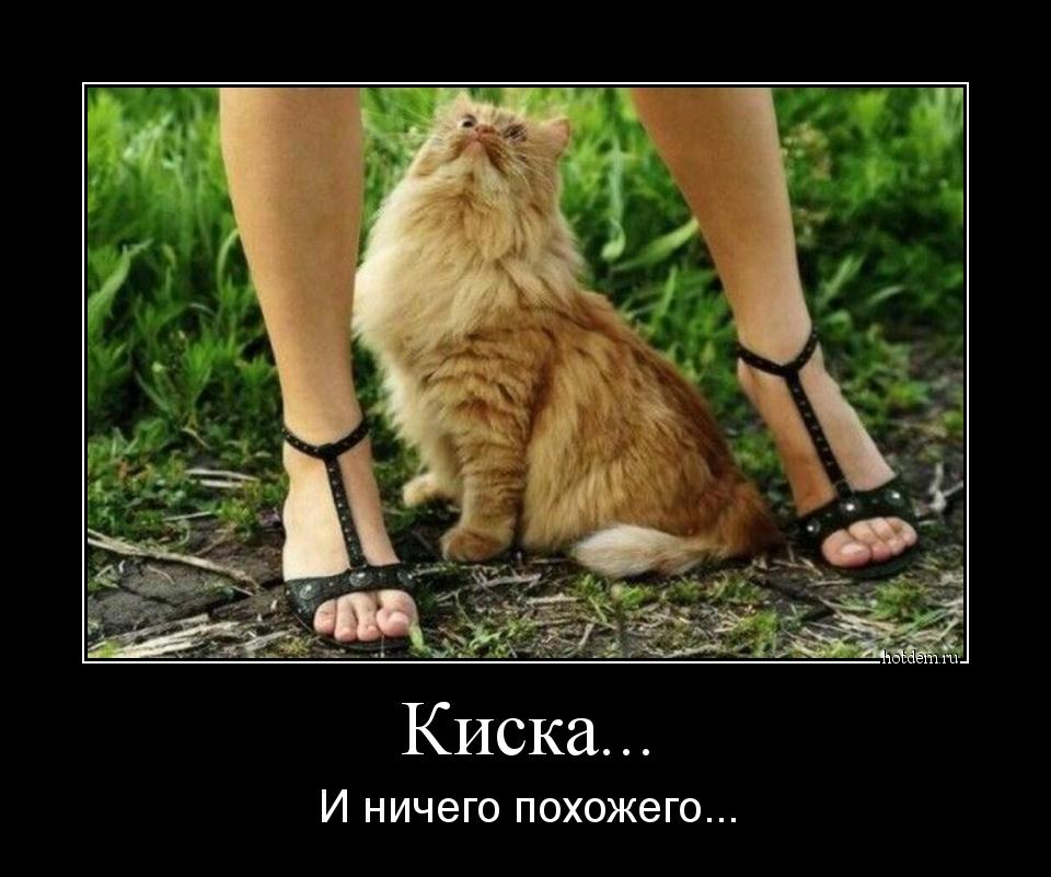 kisa-s-chlenom