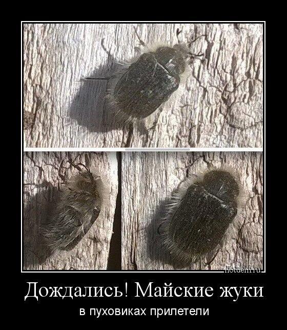 майские жуки в пуховиках картинки пока все фото