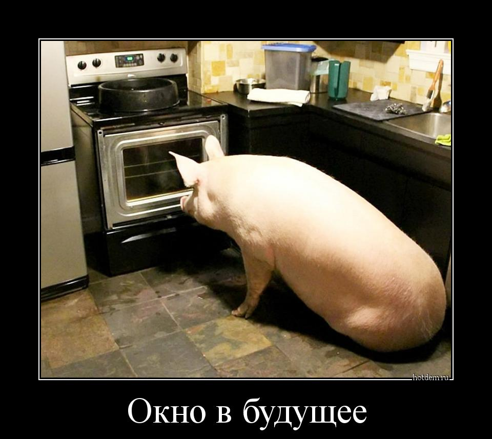 http://hotdem.ru/demotivators/2017/9/hotdem_ru_713533336283220742036.jpg