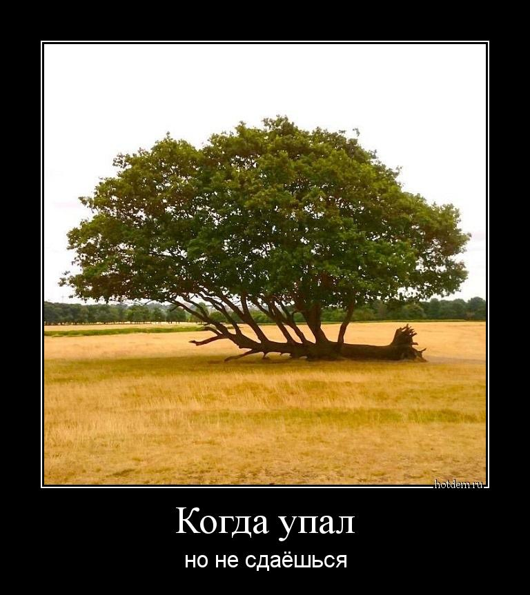 hotdem_ru_453771000960657708320.jpg