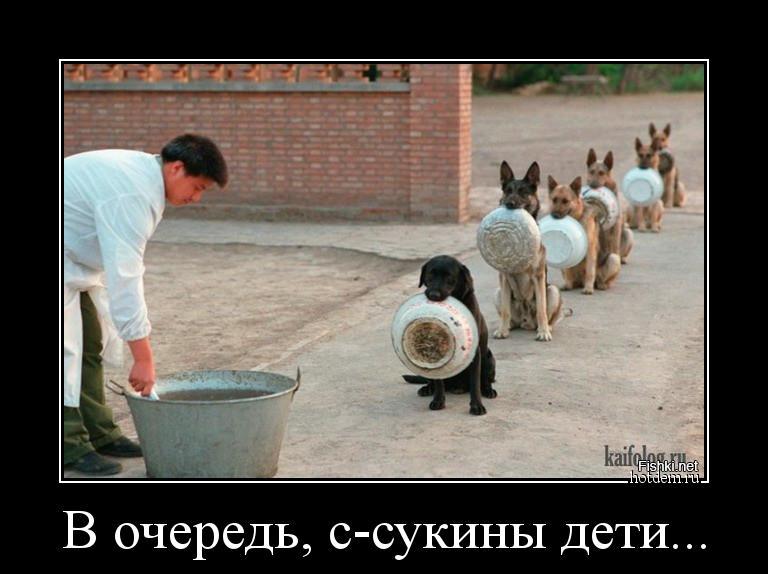 hotdem_ru_525119663608337340304.jpg