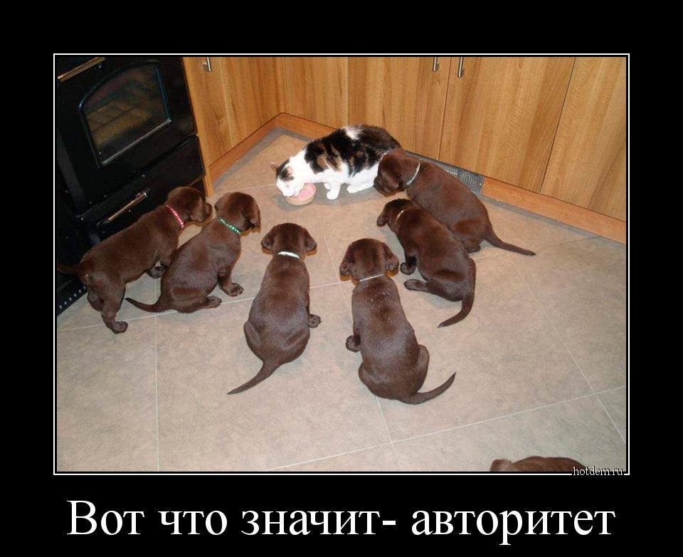 hotdem_ru_744952410763811674373.jpg