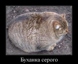 hotdem_ru_123360299768609505534.jpg