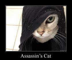 Assassin's Cat